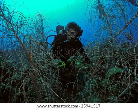 Female scuba diver underwater posing near vegetation - stock photo