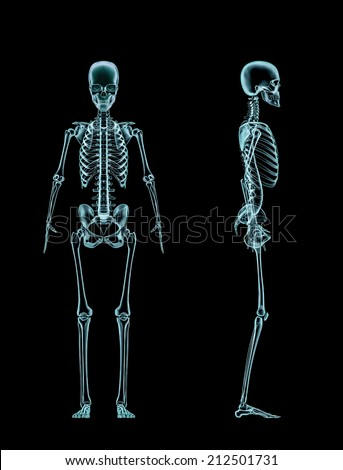 Female skeleton full body x-ray - stock photo