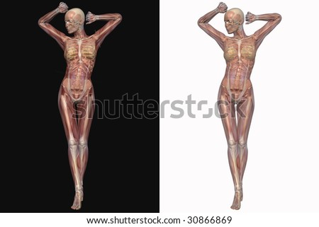 Female skeleton with transparent muscles