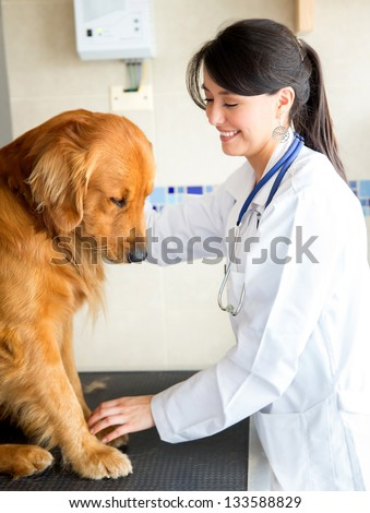 Female vet doctor checking a cute dog - stock photo