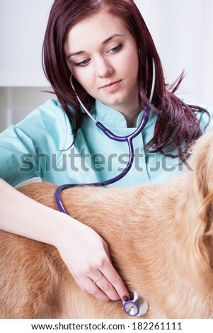 Female vet during examining dog with stethoscope - stock photo