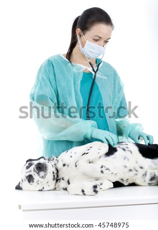 Female vet in protective, medical mask with dog in surgery - stock photo