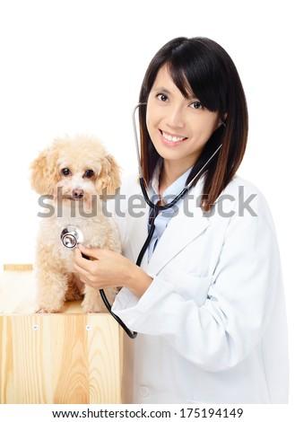 Female veterinarian diagnosis poodle dog