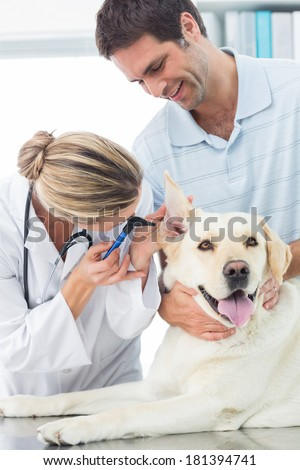 Female veterinarian examining ear of dog with man in medical office - stock photo