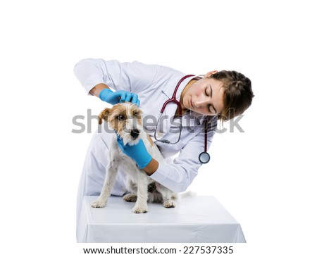 Female veterinarian examining parson russell terrier dog solated on white - stock photo