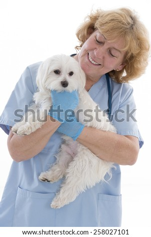female veterinarian holding a miniature poodle in her arms - stock photo