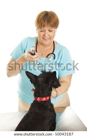 Female veterinarian looking in a patients eyes with an otoscope.  Isolated on white. - stock photo
