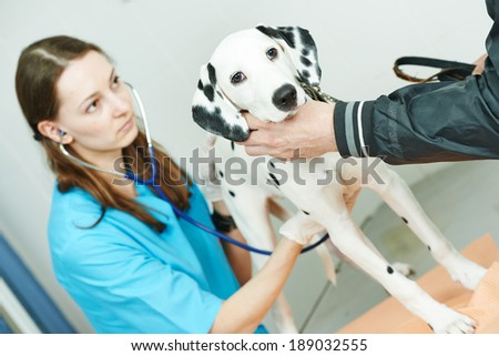 Female veterinarian surgeon worker treating Dalmatian dog in veterinary surgery clinic - stock photo