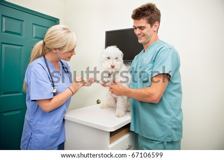 Female veterinarian with assistant examining dog's paw - stock photo