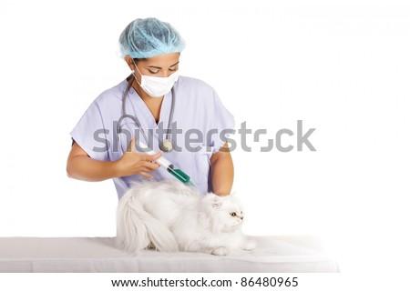 female veterinary injecting vaccine in white angora cat - stock photo