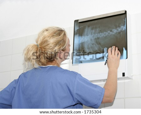 Female veterinary surgeon (in scrubs) examining a X-ray of a Cat - stock photo