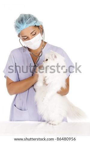 female veterinary taking care of beautiful angora white cat - stock photo