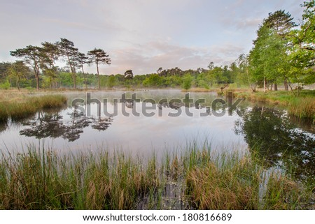 Fen in spring on a slightly foggy morning - stock photo