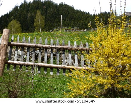 Fence and spring meadow - stock photo