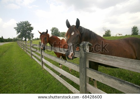Fence buddies in rural Tennessee - stock photo