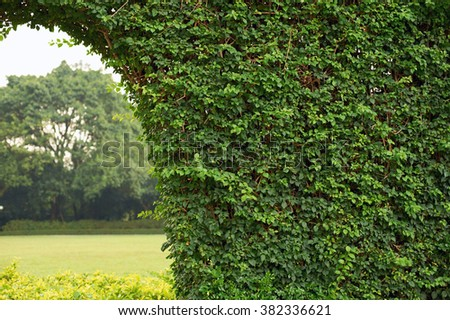 Fence from a foliage - stock photo