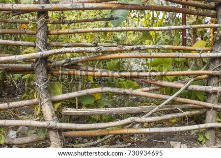 fence of a wooden vine