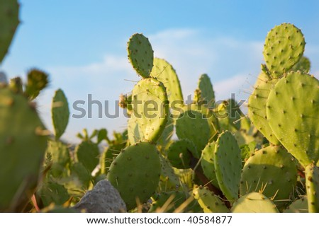 Fence of prickly pear behind blue sky