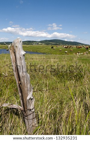 Fence post in the foreground with water and large field with cows and a small Atlantic town in the background - stock photo