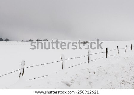 Fenced fields and trees in winter landscape, covered by the snow - stock photo
