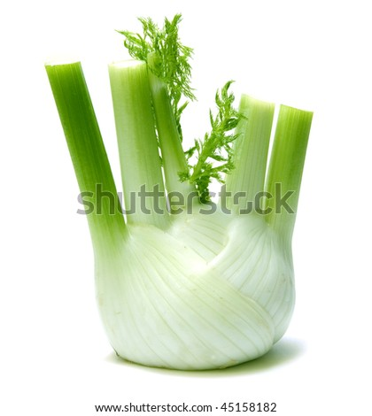 Fennel - stock photo