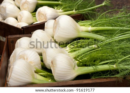 Fennel Bulbs with Edible Green Stems and Leaves, Recently Cut from the Field in Wood Crates, Ready for Market or Eaten Cooked or Uncooked, Raw. - stock photo