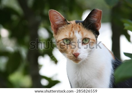 Feral Calico Cat - stock photo
