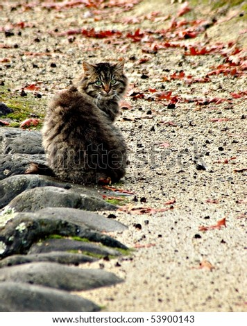 Feral cat in park - stock photo