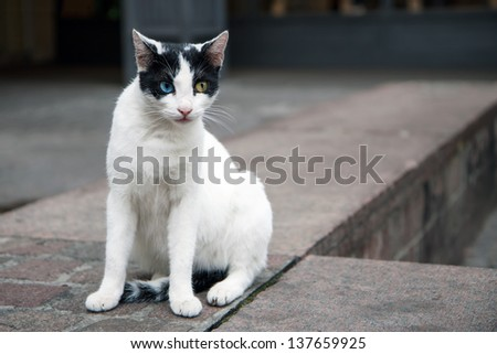 Feral cat with one blue and one yellow eye in Athens, Greece - stock photo