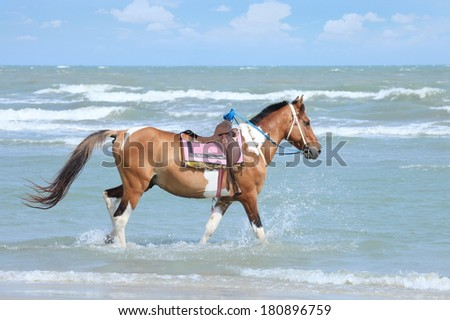 Feral horse and saddles the space for you to take a stroll, take you on a sea beach. Ideal for a photo you took your place like you're riding a horse.  - stock photo