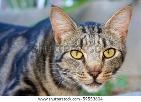 Very Cute Young Multicolored Calico Cat Stock Photo