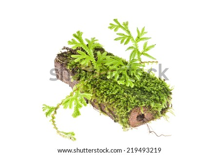 Fern and Moss Growing on The  brick