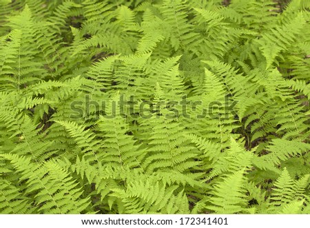 Fern background - stock photo