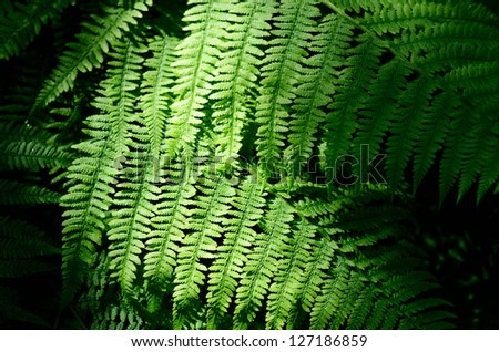 fern close-up in the forest - stock photo