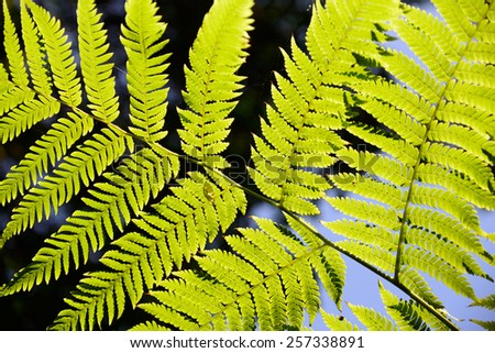 Fern close-up in the forest with the sun shining through - stock photo