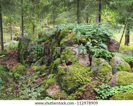 Fern in green forest - stock photo