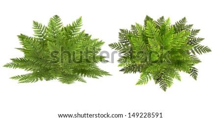 fern, isolated on the white background - stock photo