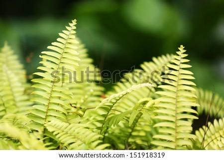 Fern leaf - stock photo