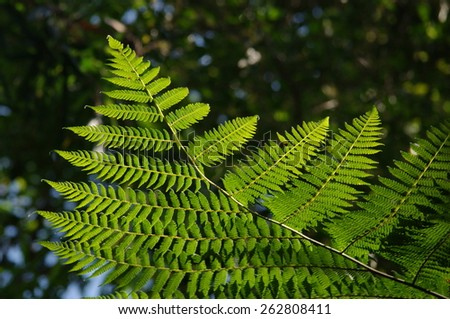 fern leaf background