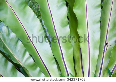 Fern leaf close up