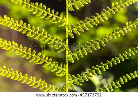 Fern leaf. Fern leaves foliage in the deep forest - stock photo