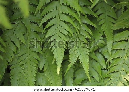 Fern leaf for background. - stock photo