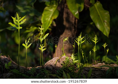 Fern leaf growing in forest in low key scene. - stock photo
