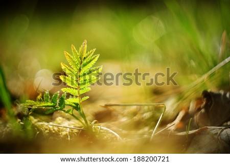 Fern leaf in the sun - stock photo