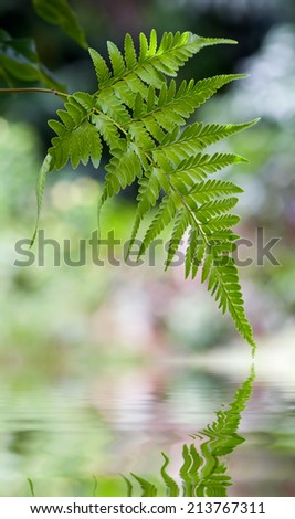 fern leaf over nature background - stock photo