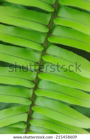 Fern leaf texture, Natural abstraction in forest - stock photo
