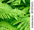 Fern leaves close-up natural background - stock photo