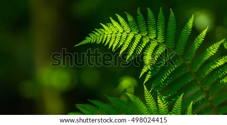 Fern leaves under bright light in spring, in a mountain forest
