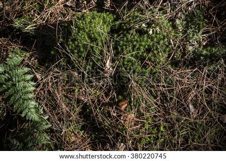 Fern on forest floor - stock photo