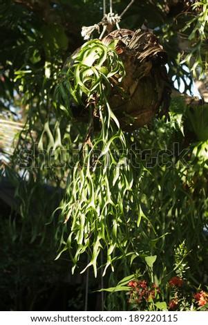 fern on trees - stock photo